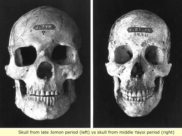 http://realhistoryww.com/world_history/ancient/Misc/Americas/Jomon_skull_1.jpg