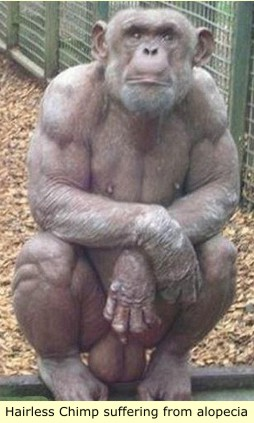 Albino chimpanzee the reasons for black slavery and albino domination